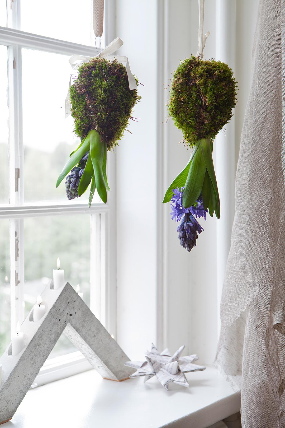 Hyacint-upp-och-ned©Anna-Lefvert