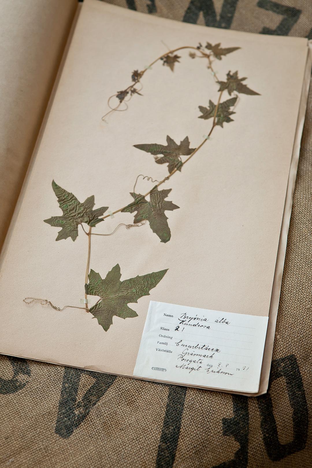 Herbarium1©Anna-Lefvert