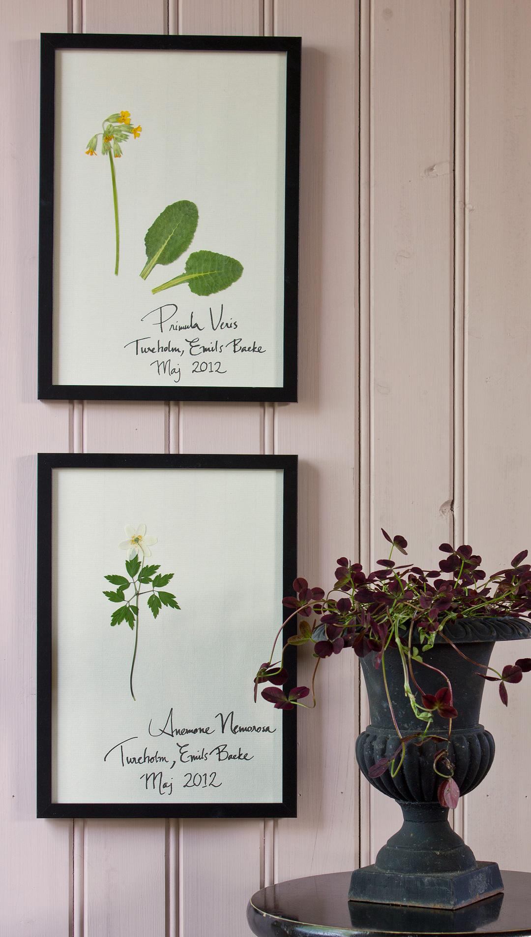 Herbarium11©Anna-Lefvert
