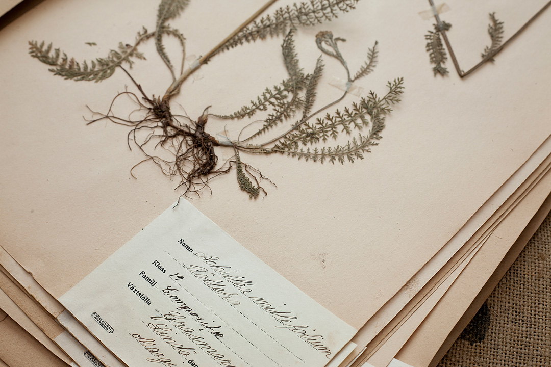 Herbarium3©Anna-Lefvert