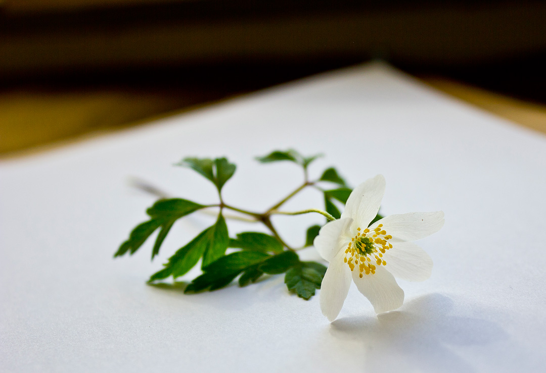 Herbarium8©Anna-Lefvert