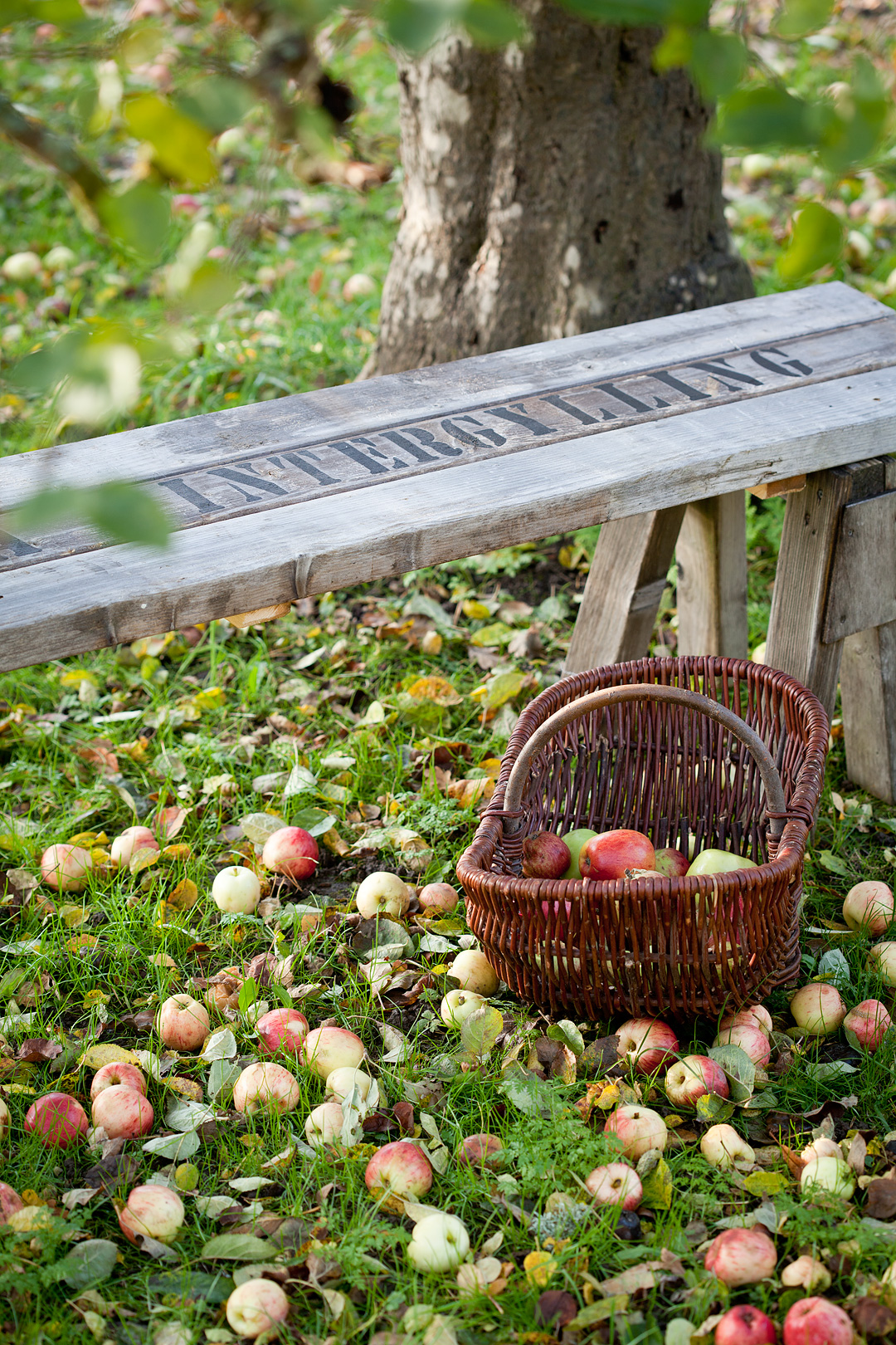 Applebench1©Anna-Lefvert