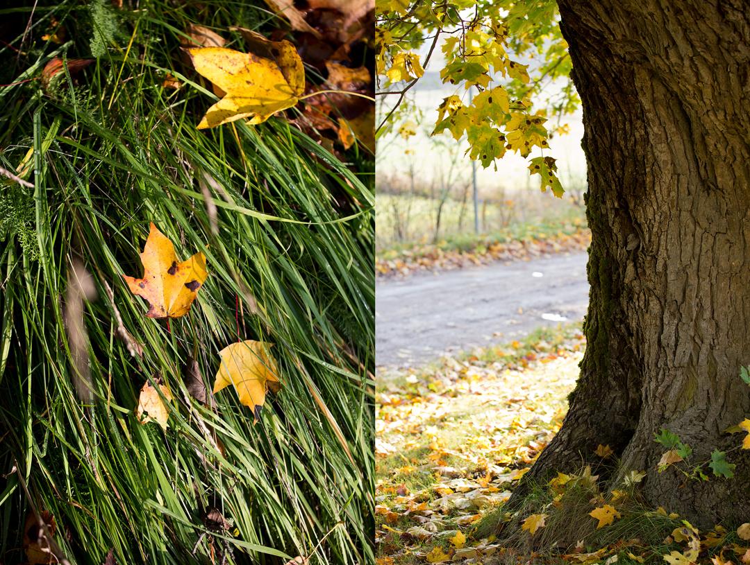 Autumn2©Anna-Lefvert