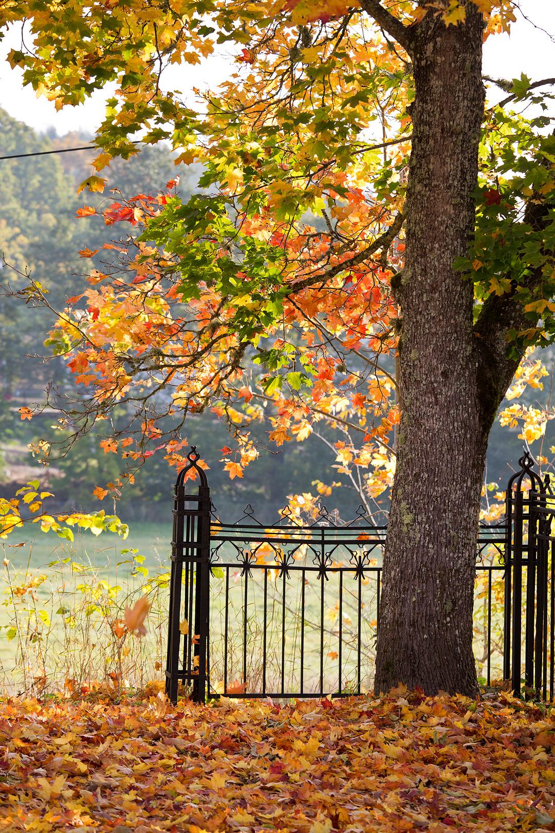 Autumnleaves©Anna-Lefvert