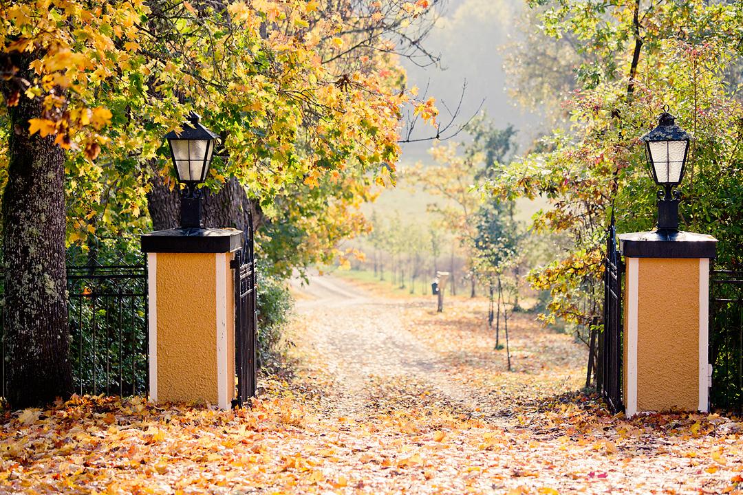 Autumnleaves2©Anna-Lefvert