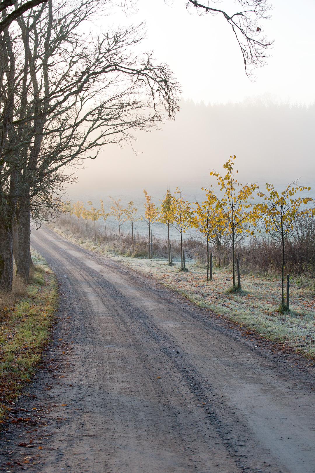 Autumnfog©Anna-Lefvert