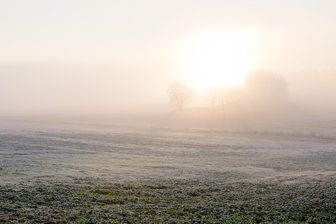 Autumnfog2©Anna-Lefvert