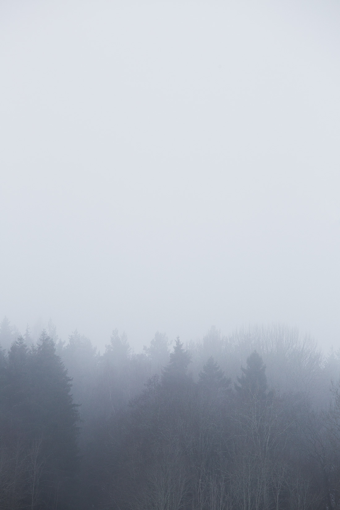 Fog©Anna-Lefvert