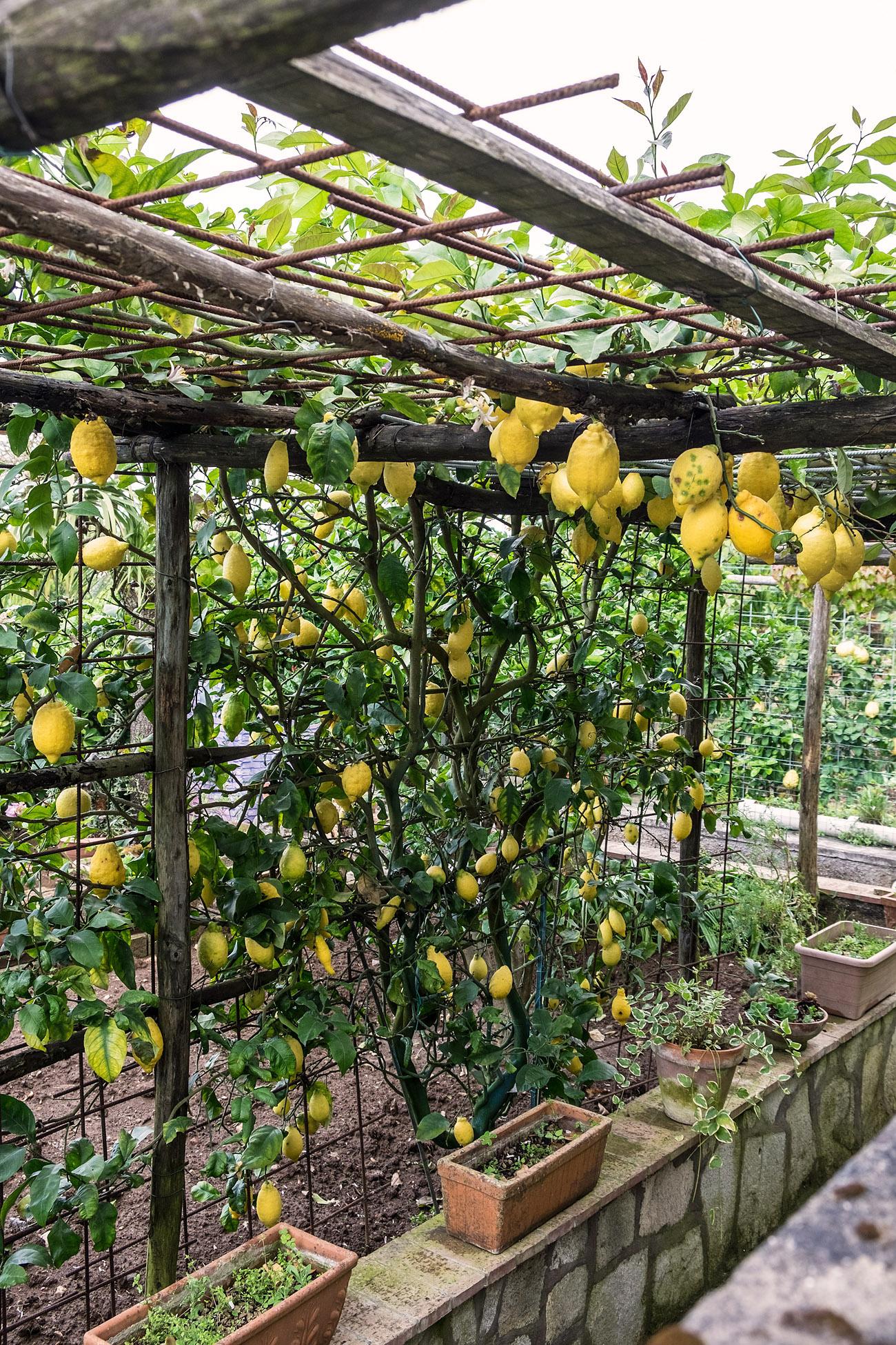 Fotoblogg om diy   inredning, mat och trädgård   anna lefvert